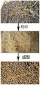 浙江生物质秸秆成型机/秸秆木屑颗粒机/秸秆颗粒压制机